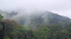 02 African jungle. The mist rises up and moves over the rainforest Stock Footage