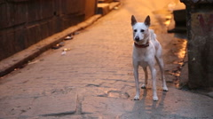 Dog standing in a street in Varanasi and barking before leaving. Arkistovideo