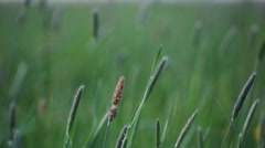 Fresh greenery of a spring meadow Stock Footage