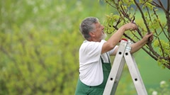 Senior handsome gardener cutting branches of trees Stock Footage