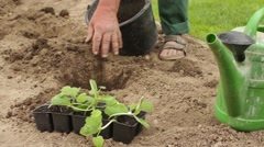 Gardener preparing a seedbed for planting Stock Footage