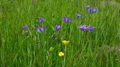 Flower bell against the green grass. Stock Footage