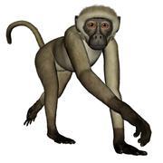 Monkey walking - 3D render Stock Illustration
