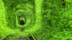 Train in a Green Tunnel of Trees Stock Footage