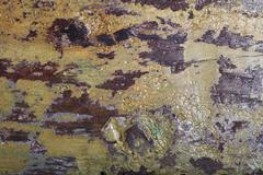 wood texture with paint and varnish - stock photo