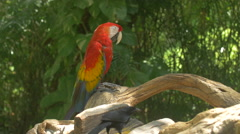 Parrot sleeping on a branch at Xcaret Park, Mexico Stock Footage
