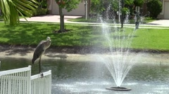 Blue Heron Bird by Lake Water Fountain Stock Footage