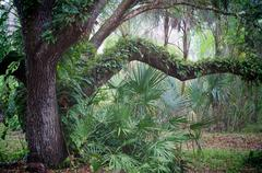 oak tree and palms in subtropical forest - stock photo