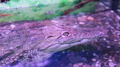Nile crocodile head above water Stock Footage