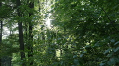 Glimmering sun tilt down in beech forest Stock Footage