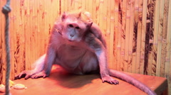 Sad marmoset in the cage Stock Footage