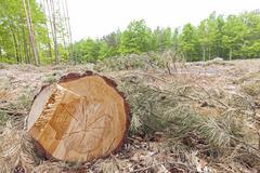 Tree stump on felled forest. Stock Photos