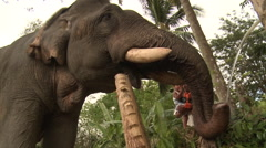 Elephant drinking water, low angle shot, Thailand Stock Footage