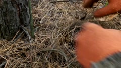 Hands rake the cut grass and mushroom Stock Footage