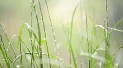 detail of grass in the rainfall, shallow depth of field, - stock footage