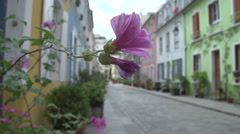 Pink geranium on a windy day Stock Footage