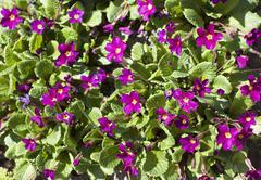 Small crimson flowers Stock Photos