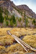 Log-path ower swamp in Altay tajga - stock photo