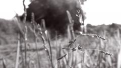 Man pushing a lawn mower, close up on grass in foreground - B&W - short cut - stock footage