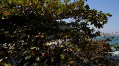 Sheraton Beach Rise Stock Footage
