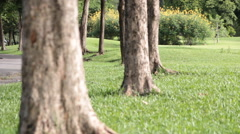 Dolly:lawn in a park with trees and clouds sky footage Stock Footage