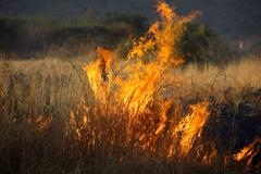 Wildfire - stock photo