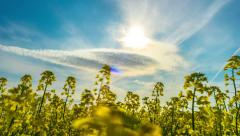 Canola field, timelapse with slider Stock Footage