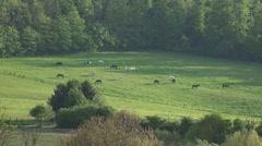 4k Horses on a meadow far away Stock Footage