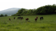 Horses On Green Meadow Stock Footage
