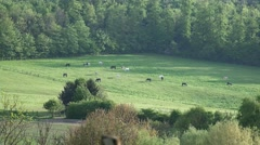 4k Horses on a meadow far away zoom out Stock Footage