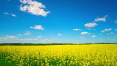 Canola field, panoramic timelapse Stock Footage