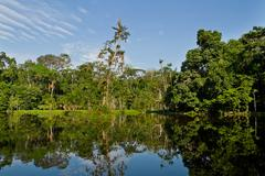 Beautiful landscape of the amazon rainforest, Yasuni National Park, Ecuador - stock photo