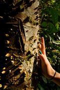 Spiky trunk of tree in amazon rainforest, Yasuni National Park, Ecuador Stock Photos