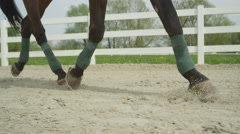 SLOW MOTION CLOSE UP: Dressage horse trotting in sand arena Stock Footage