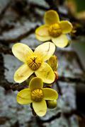 Close up shot of yellow flowers in the amazon rainforest, Ecuador Stock Photos