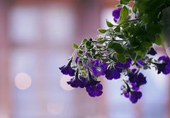 Blurred dreamy flower Stock Photos