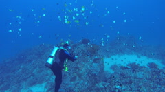 Scuba Diver Taking Picture over Large Coral Head Stock Footage