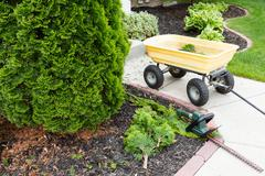 Garden tools used to trim arborvitaes - stock photo