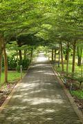 Stock Photo of Stone path into garden