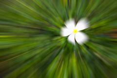 white flower and green color tone motion blur illustration abstract - stock illustration