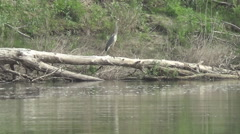 Stock Video Footage of river, heron on driftwood