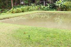 the pond with the banana tree at waterside - stock photo