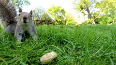 Closeup hand feeding squirrel in a park - stock footage