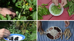Harvest berries and legume peas and beans in garden. Collage Stock Footage
