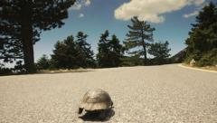 Turtle walking along the road,crawling,asphalt,tracking slider movement. Stock Footage
