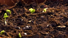 Sprouting shoots Stock Footage