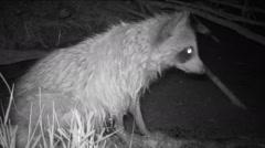 Raccoon Swamp - stock footage