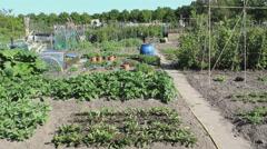 Kitchen garden vegetable garden overview Stock Footage