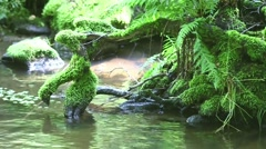 Stock Video Footage of Roots In The Water