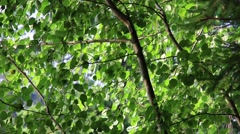 Flickering Light On The Leaves - stock footage